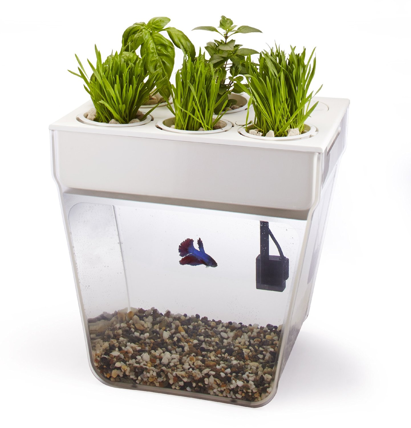 Self Cleaning Fish Bowl and Herb Garden Gadgets, Gizmos and Cool ...