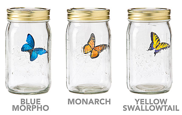 electronic_butterfly_in_a_jar_2